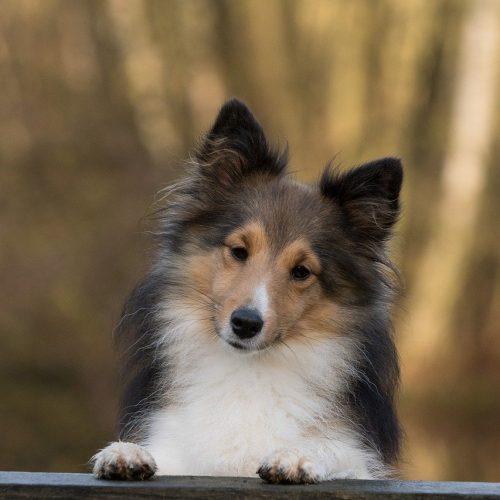dog-1086285_1280